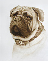 161x206 Drawing Of Dog Face. Realistic Drawing Of Dog. Pet Portrait Dog