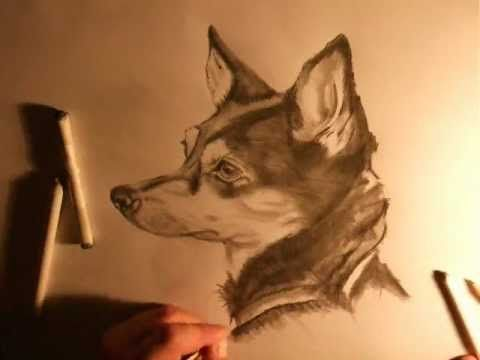 480x360 How To Draw A Realistic Dog