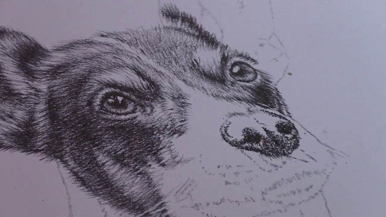 1280x720 How To Draw A Realistic Dog Nose