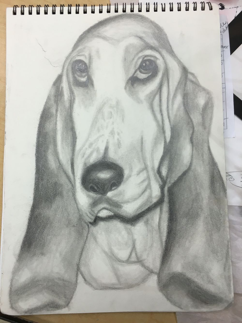1000x1334 Realistic Drawing Of Dog My Art Realistic Drawings
