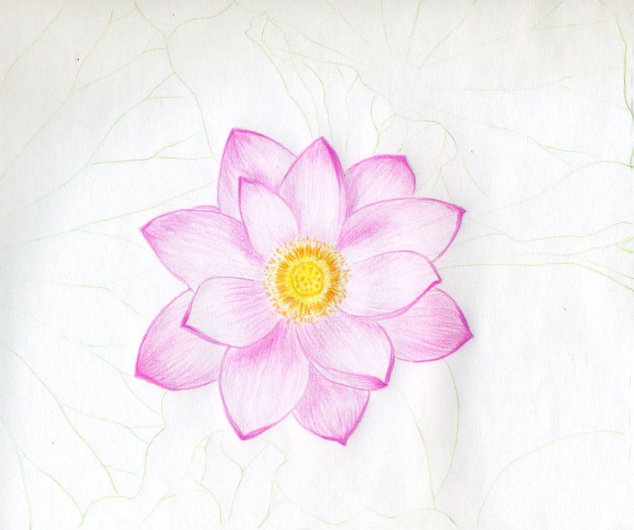 890x745 lotus flower drawings made easy