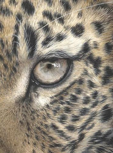 370x500 how to draw realistic animal eyes39 cheltenham open studios