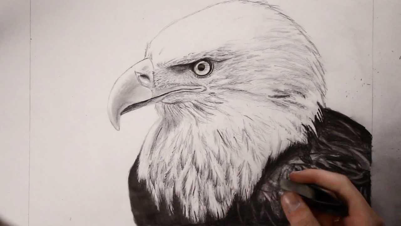 1280x720 Bald Eagle Speed Drawing