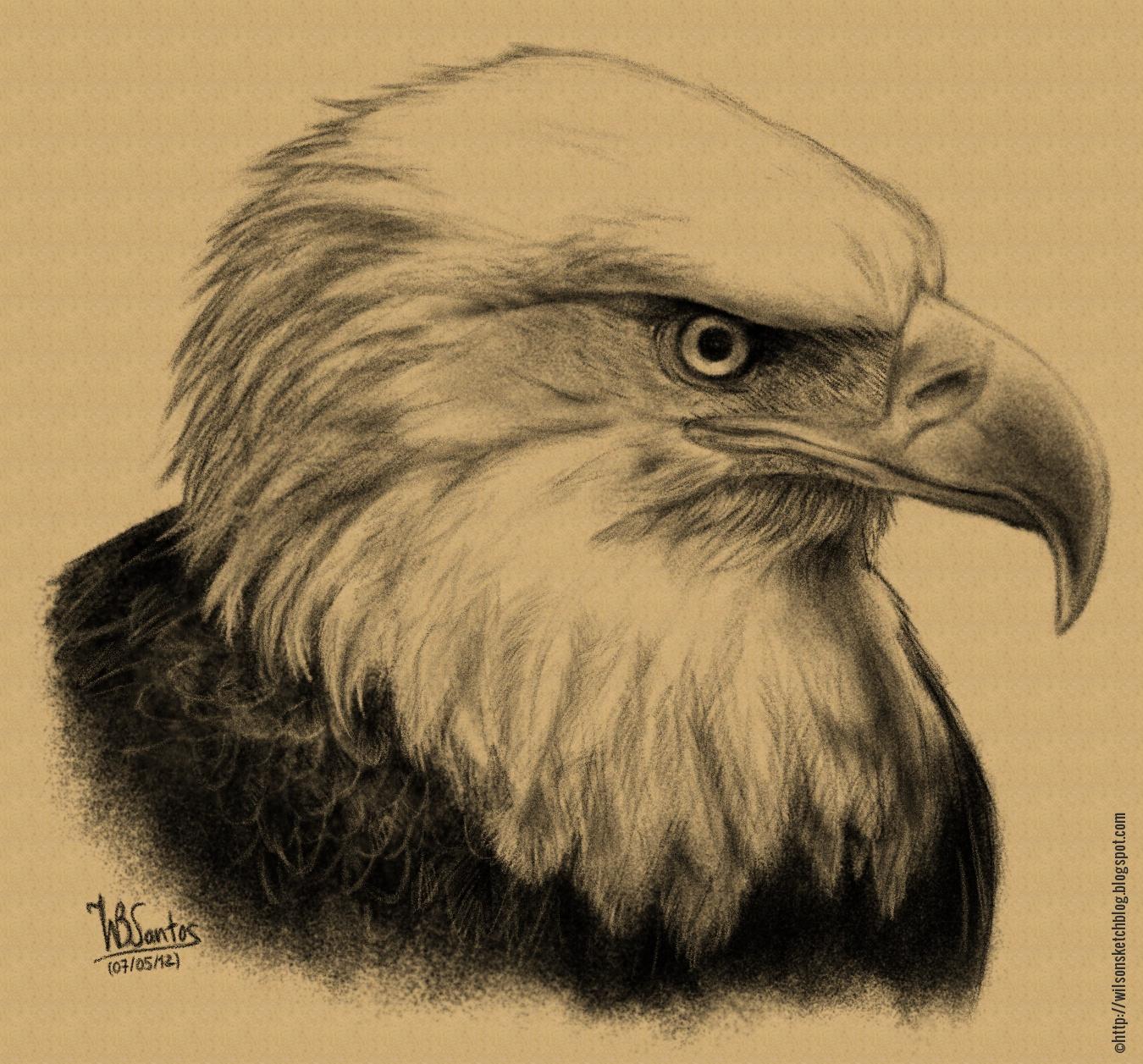 1350x1257 Bald Eagle