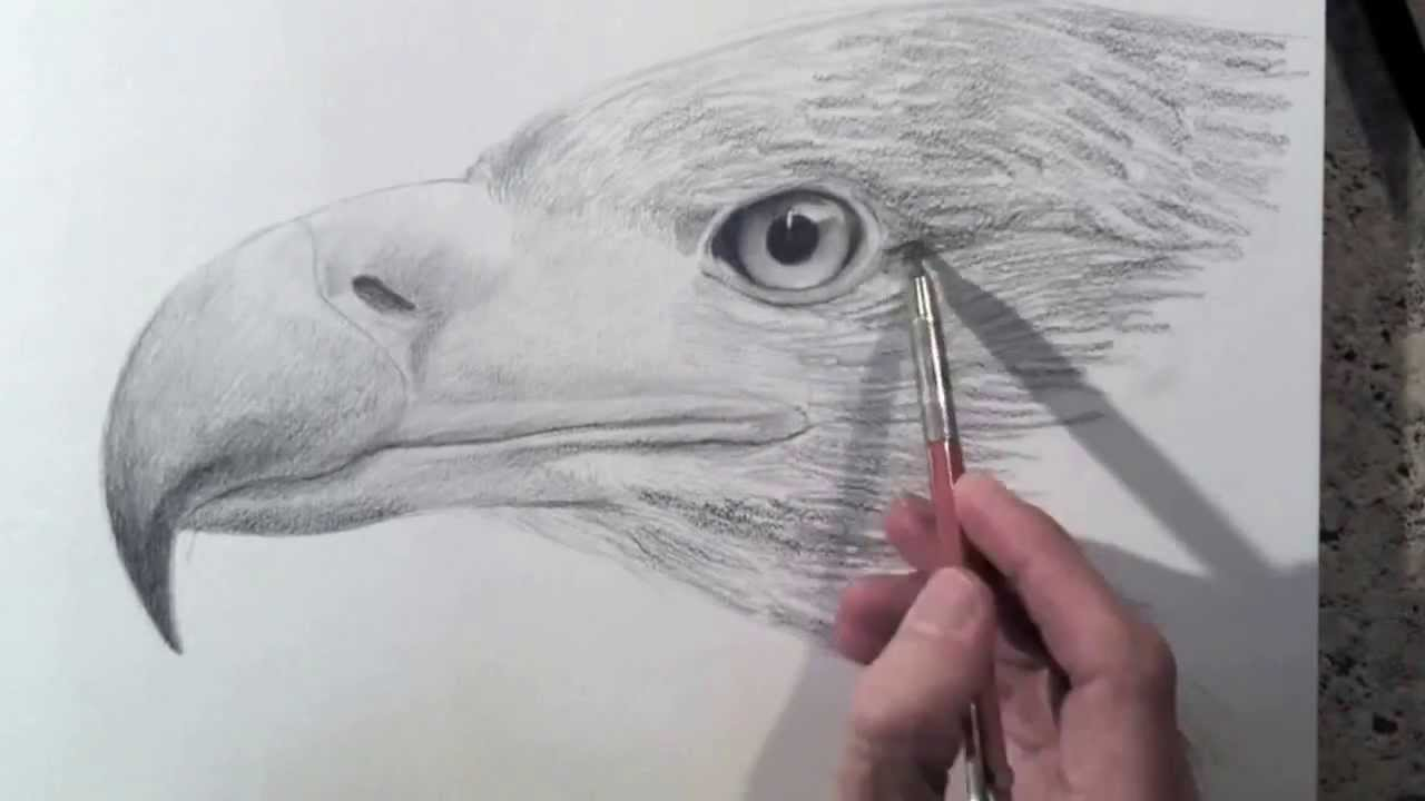 1280x720 How To Draw A Realistic Eagle Head