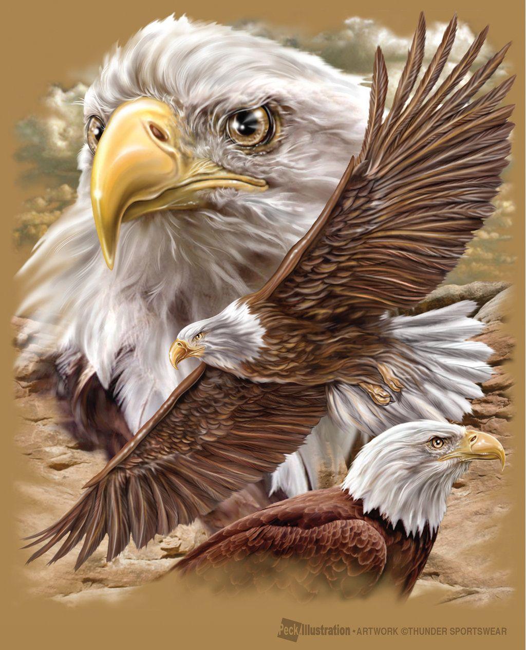 1024x1264 Realistic Eagle Drawing Eagle Cliff By Joe6peck Foto Kunst Art