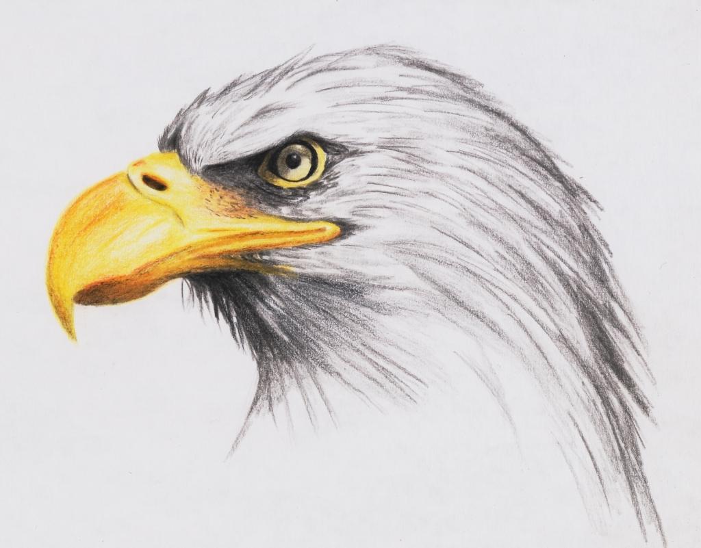 1024x801 Realistic Eagle Drawing Bald Eagle Highdarktemplar