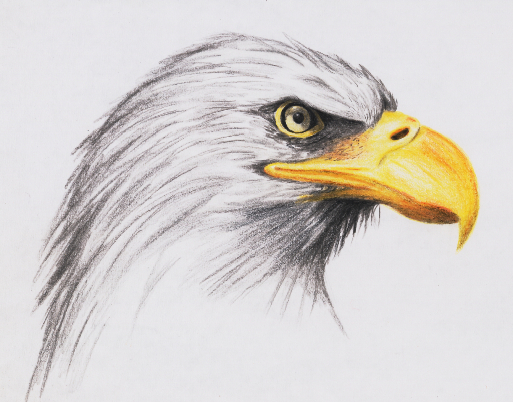 1024x801 Realistic Eagle Drawing Eagle Drawing Pictures
