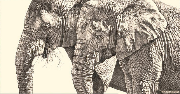 617x324 42 Incredibly Realistic And Adorable Pencil Illustrations