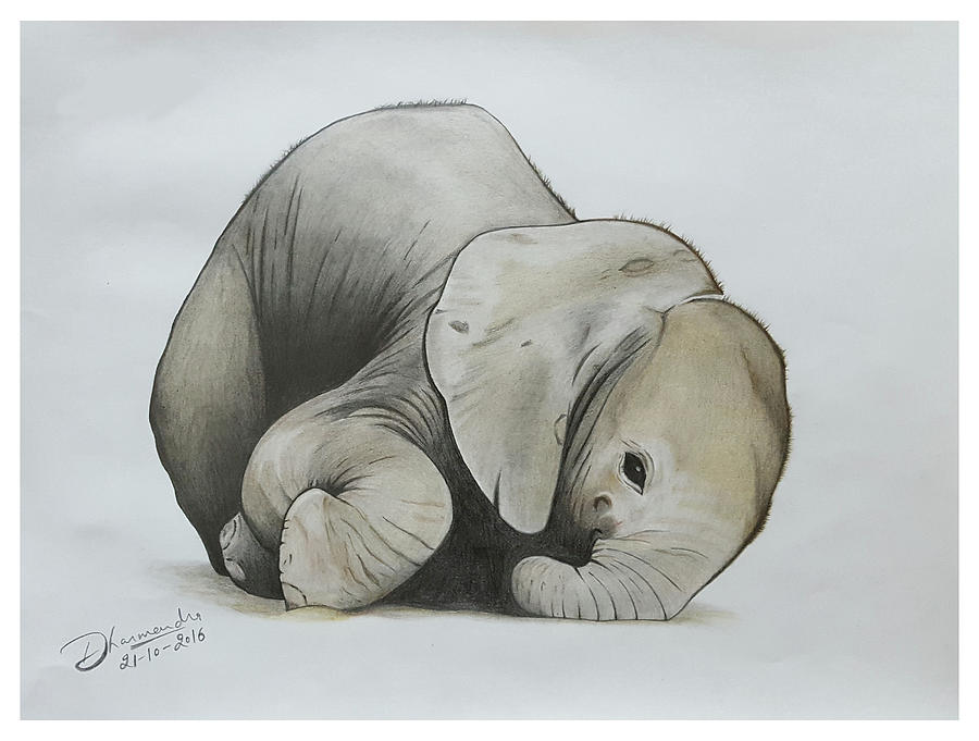 900x681 Baby Elephant Realistic Color Pencil Sketch Drawing By Sketches