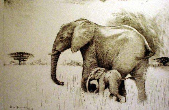 585x380 Elephant Drawings Free Printable, Jpeg, Png Format Download
