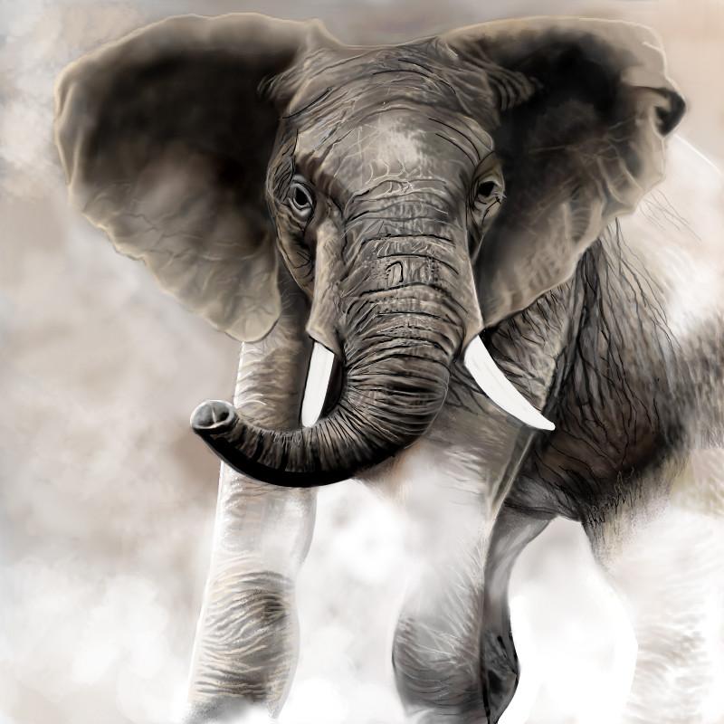 800x800 Elephant An Animals Speedpaint Drawing By Betty