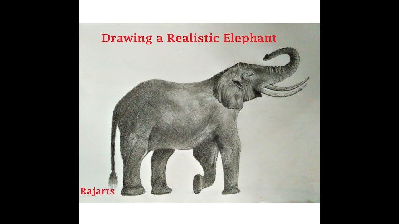 1280x720 How To Draw A Roaring Elephant Amazing Sketch