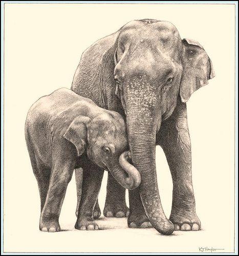 467x500 Jumbo Family' Asian Elephants