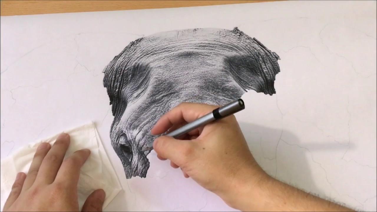 1280x720 Realistic Elephant Drawing (Timelapse)