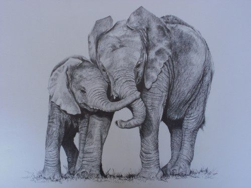 500x375 Baby And Mom Elephant