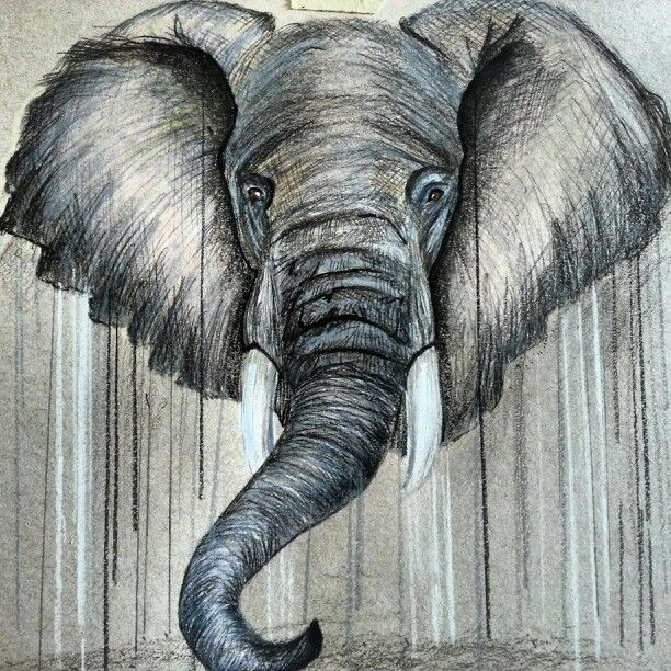 Realistic Elephant Drawing at GetDrawings.com | Free for ... Realistic Elephant Drawing