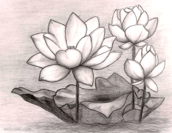 660x510 40 Beautiful Flower Drawings And Realistic Color Pencil Drawings
