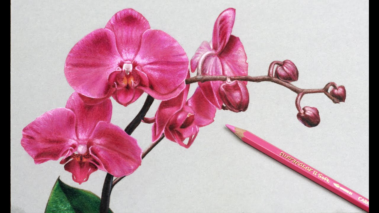 1280x720 How I Draw Flowers, Orchids Drawing