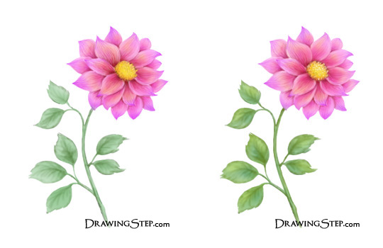 540x350 How To Draw A Flower Step By Step