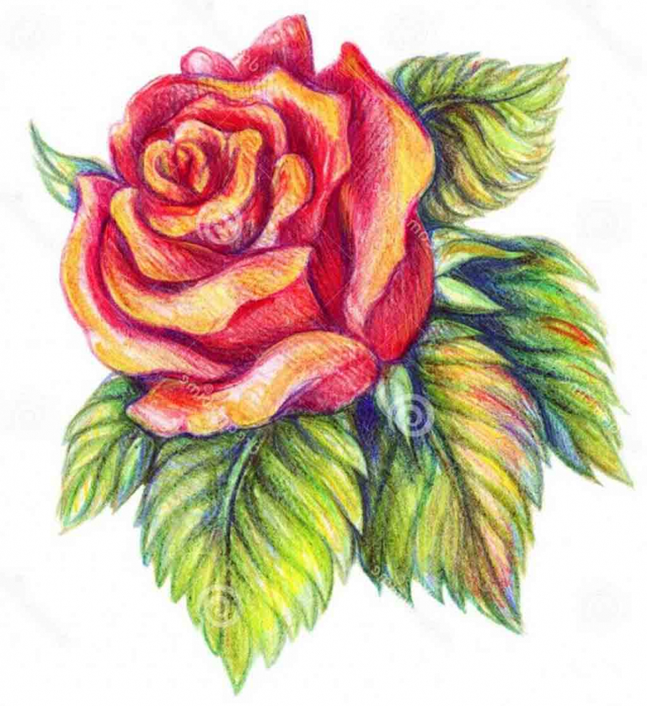 939x1024 Ideas Of Draw Realistic Flowers In Pencil Colour Pencil Flower