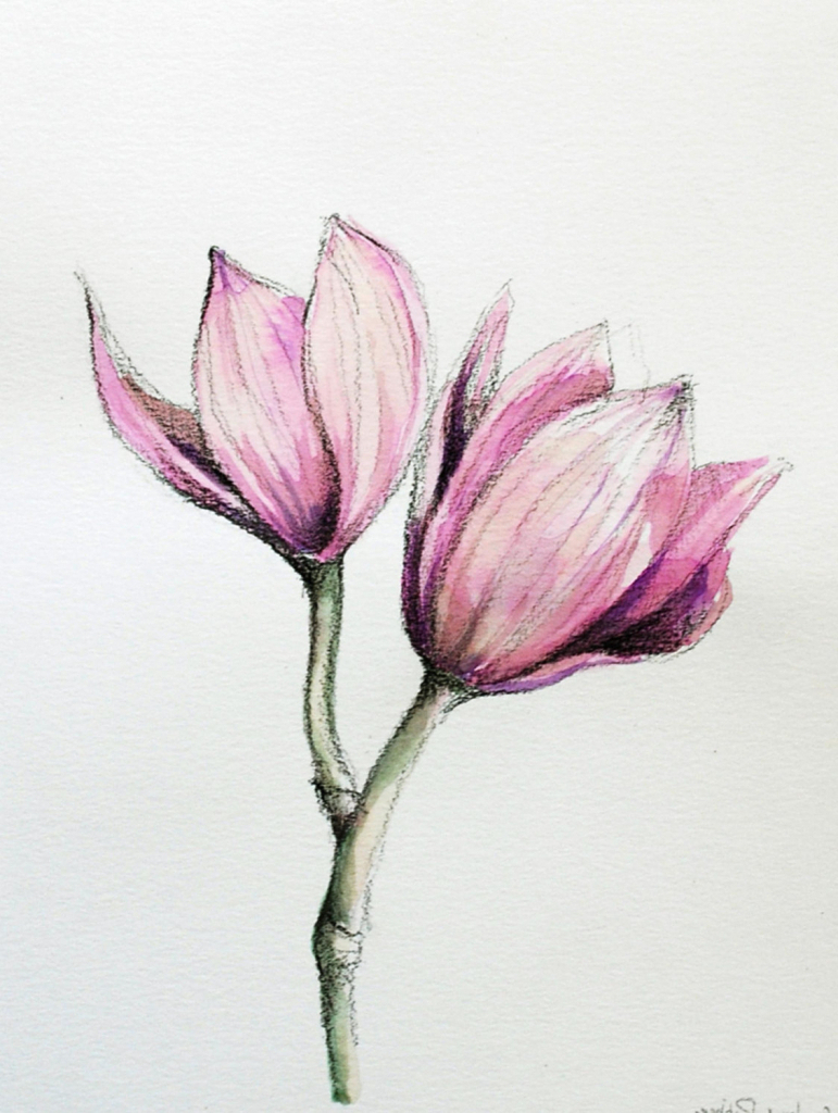 771x1024 Realistic Drawings Of Flowers In Color Drawing Flowers Images