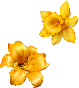 328x368 Realistic Flower Drawing Free Vector Download (98,847 Free Vector
