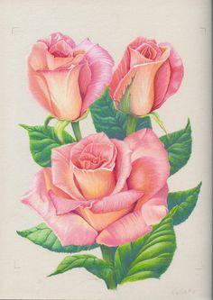 236x333 Flower Drawings Rose