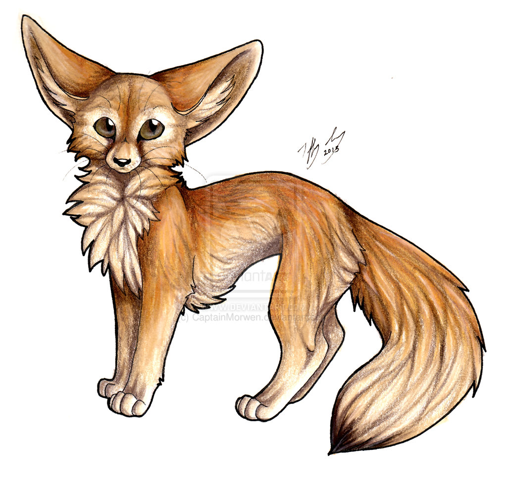 1024x987 Fennec Fox Drawing Realistic Fennec Fox Drawing Fox Fennec Fox