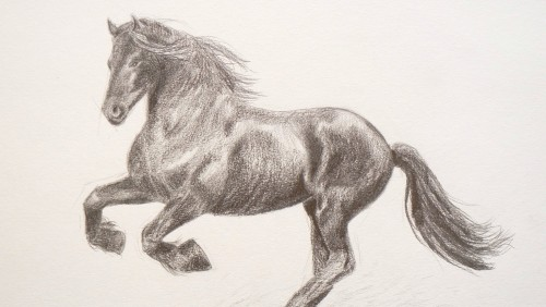 500x282 learning to draw how to draw a horse by fine art tips â€