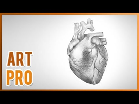 480x360 How To Draw A Realistic Heart Step By Step