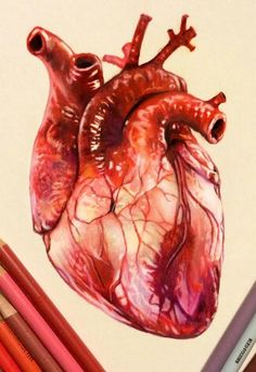 236x343 Realistic Human Heart By Lunacanan T H E A R T S