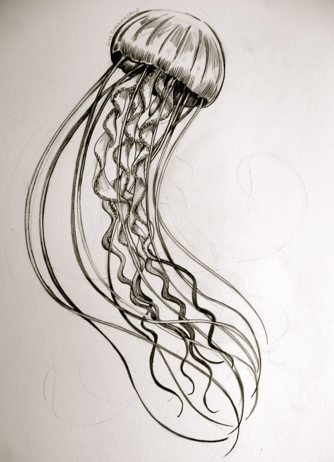 It is a photo of Striking Jellyfish Line Drawing
