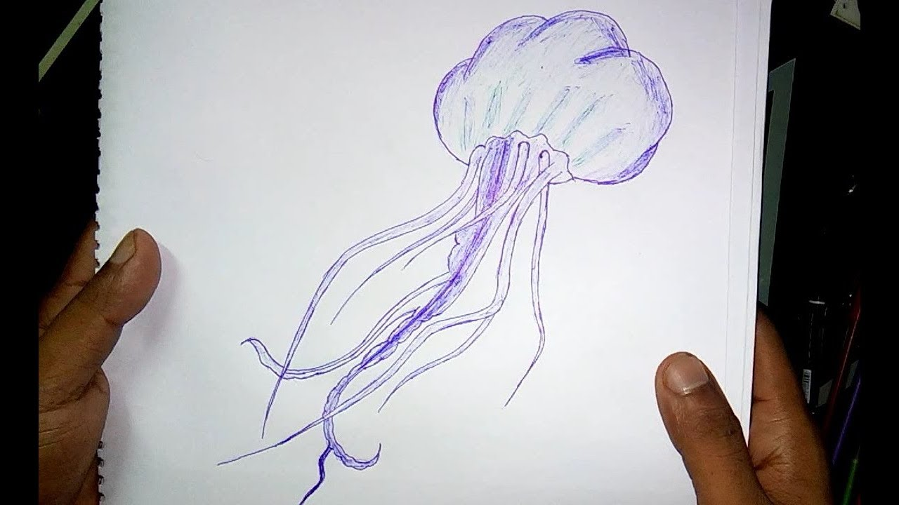 Line Drawing Jellyfish : Jellyfish drawing at getdrawings free for personal use