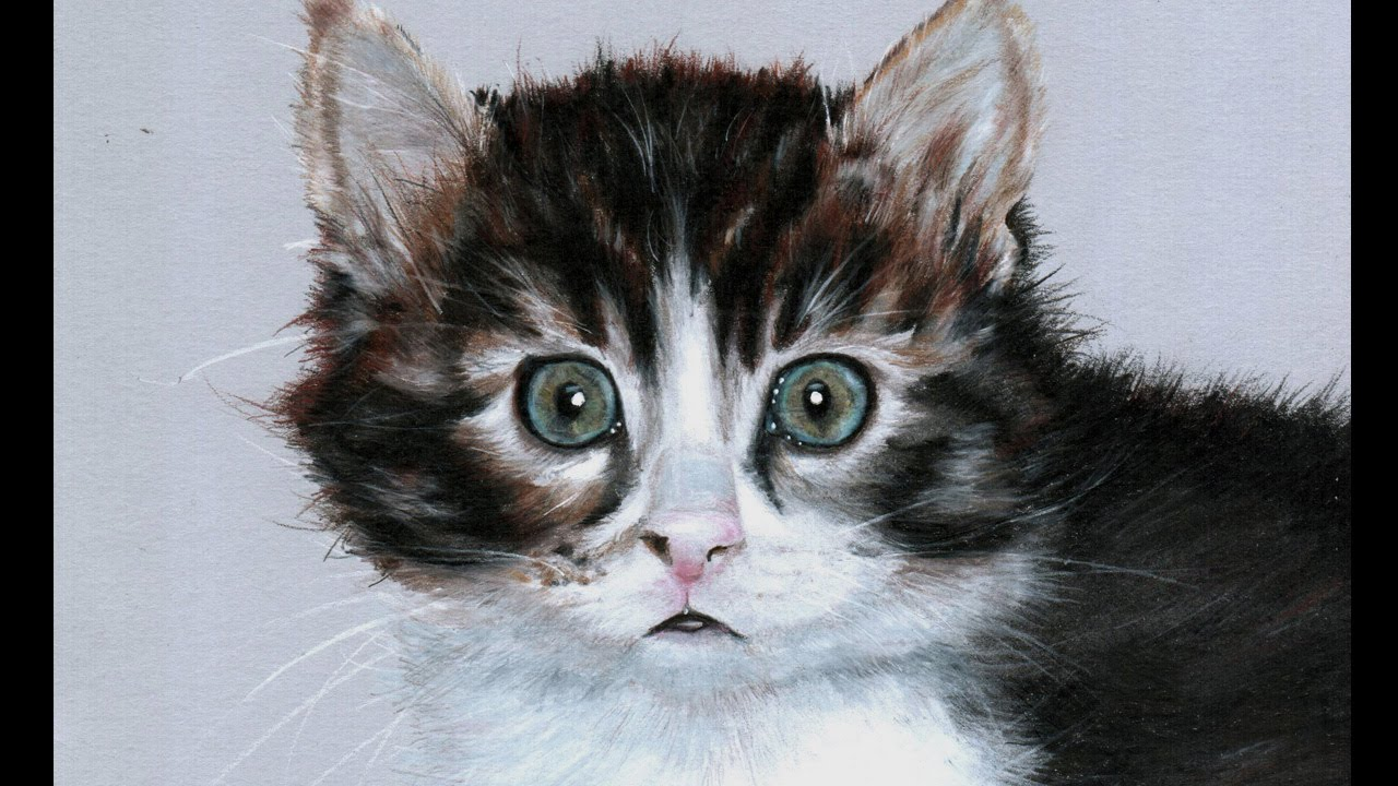 realistic kitten drawing at getdrawings com free for personal use
