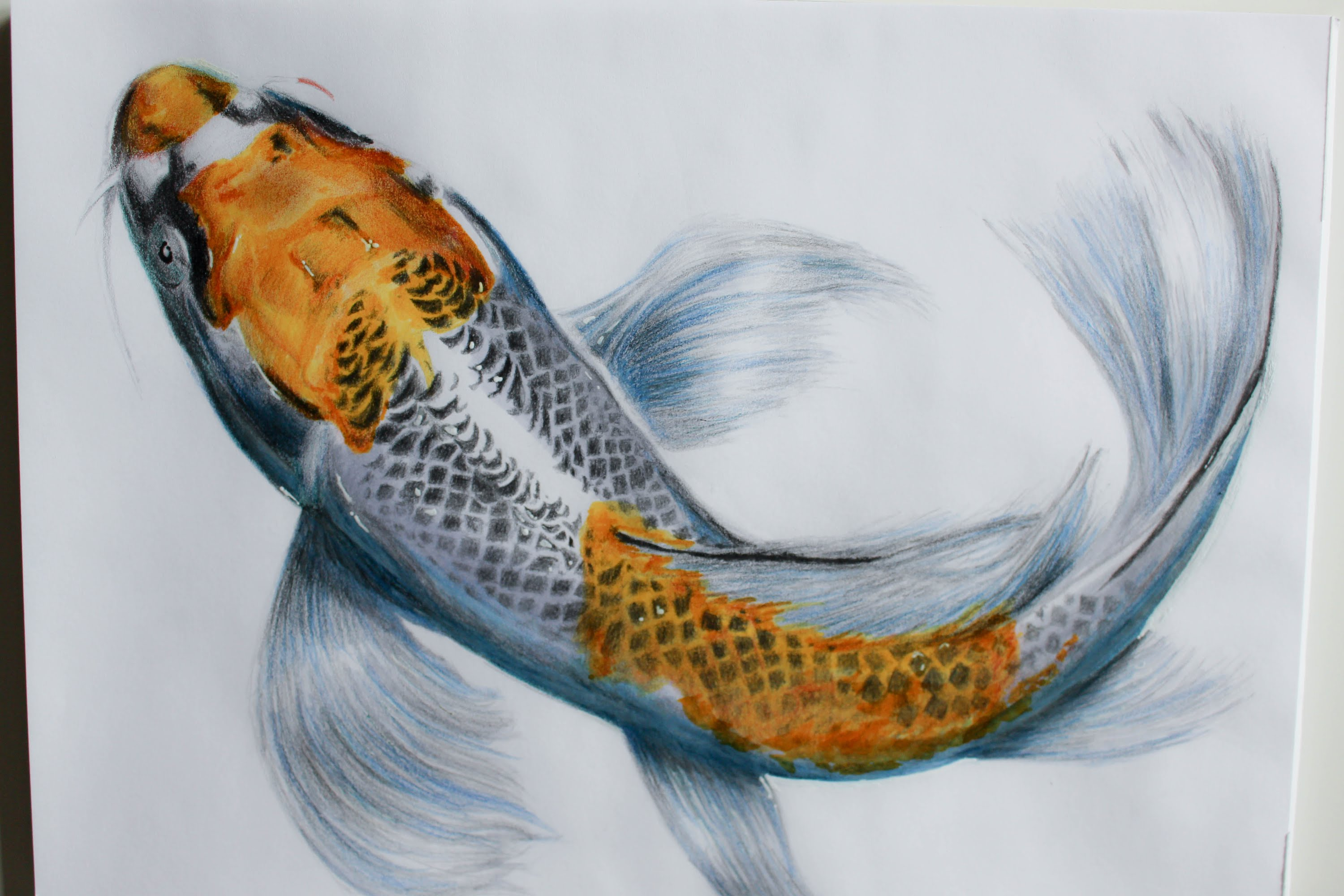 It is an image of Irresistible Realistic Fish Drawing