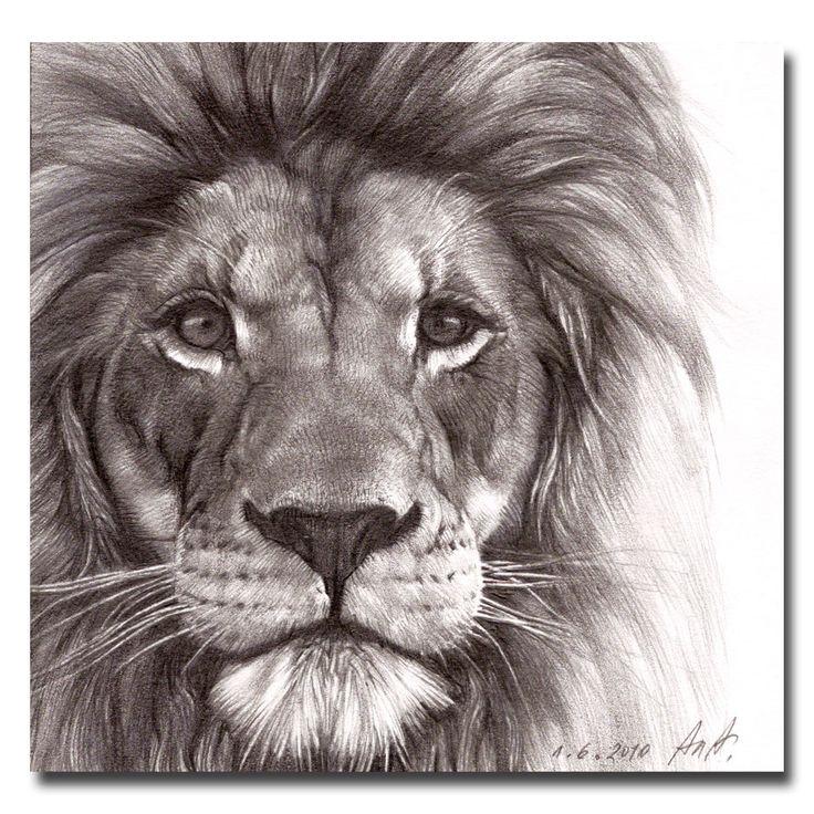 736x736 Animals Art Drawings Lion Tattoo Lion Drawings Lion Drawing Tattoo
