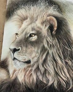 236x295 Charcoal Drawing, 8x10 Original Lion Art, Lion Drawing, Lion