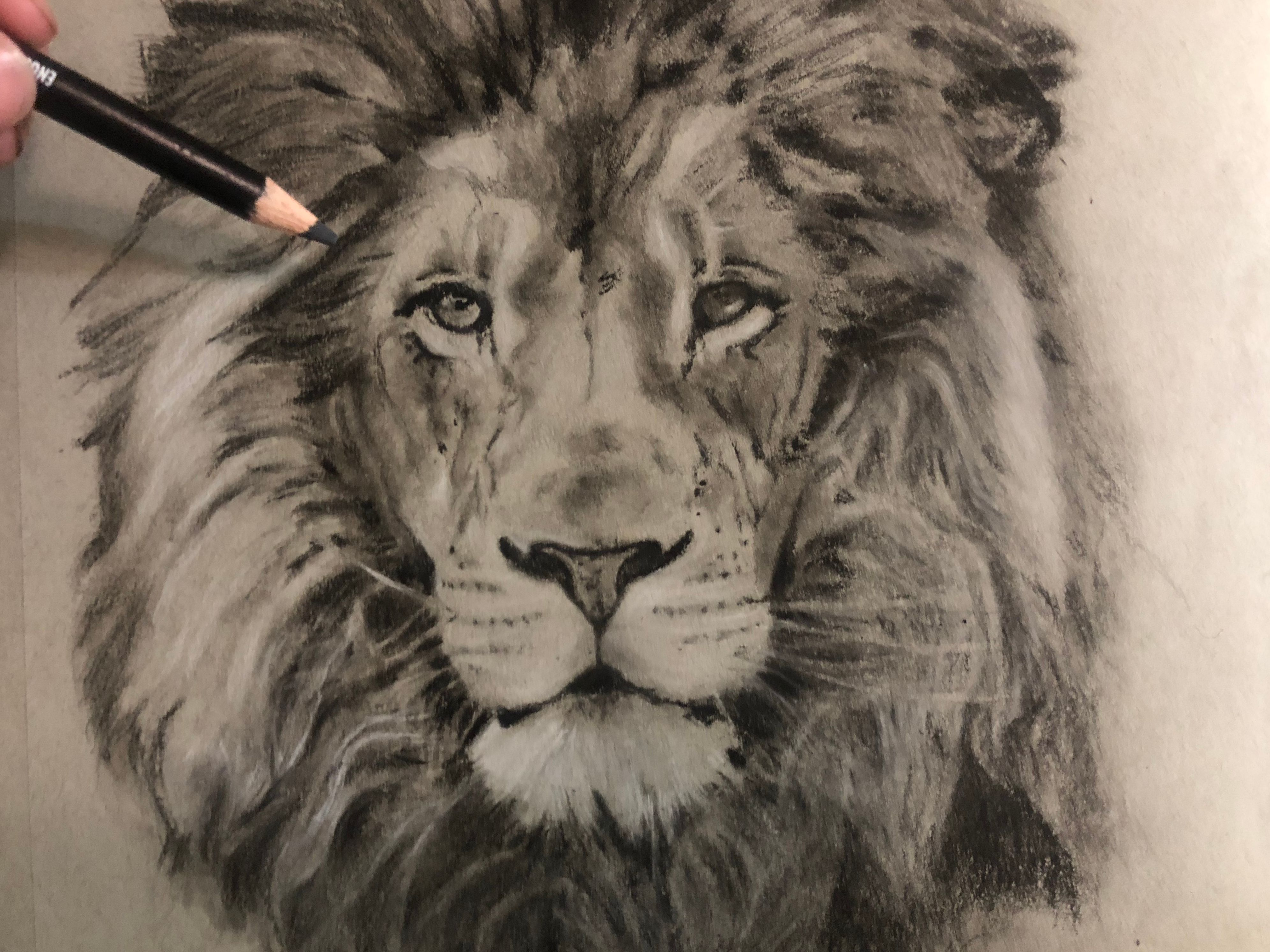 3983x2986 Drawing A Lion! Realistic Art With Charcoal Steemit