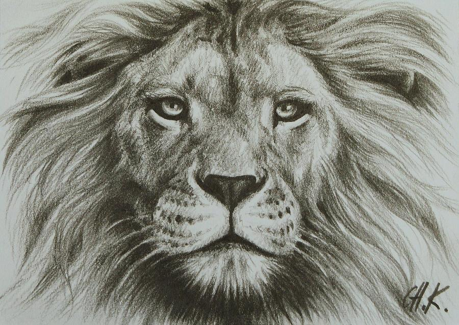 900x638 Gallery Lion Drawing By Pencil,