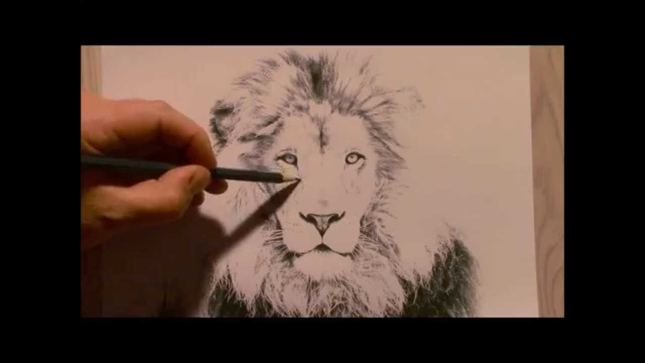 1280x720 Realistic Lion Drawing. How To Draw A Lion. Lion Drawing.