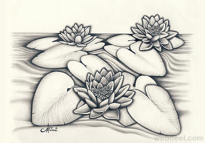 660x459 Gallery Beautiful Pencil Drawn Lotus,