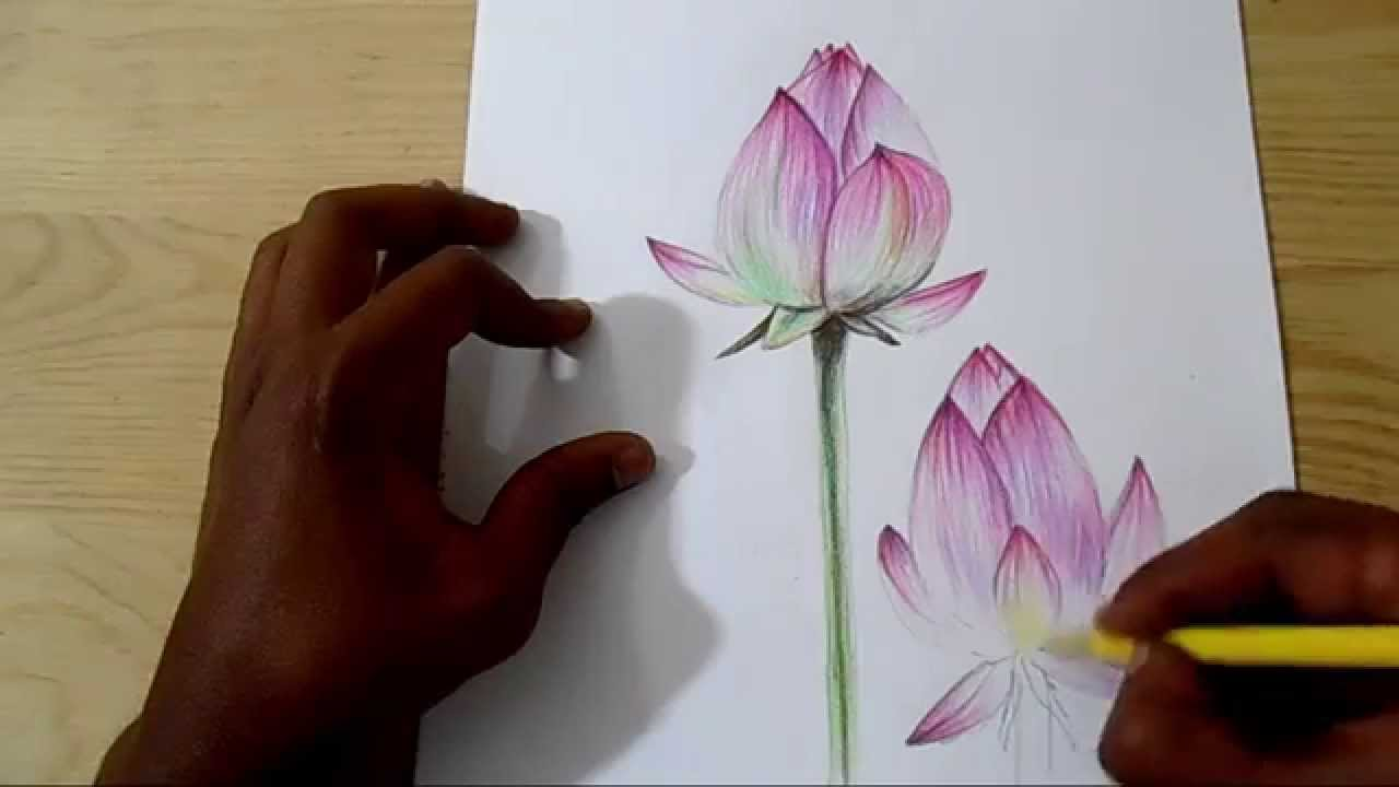 Realistic lotus flower drawing at getdrawings free for 1280x720 how to draw and shade realistic lotus izmirmasajfo Gallery