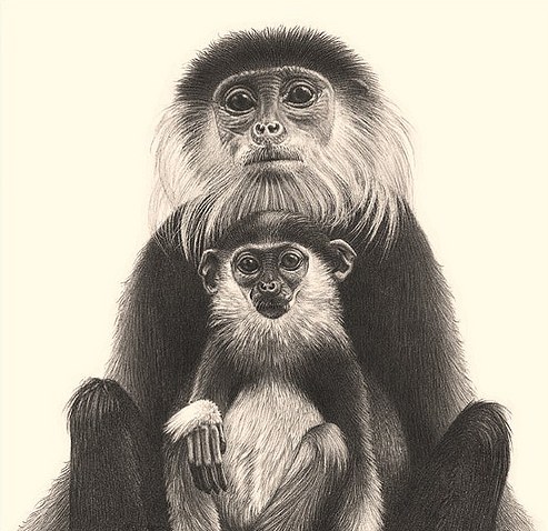 493x478 42 Incredibly Realistic And Adorable Pencil Illustrations
