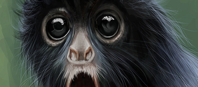 682x300 Drawing A Hairy Monkey