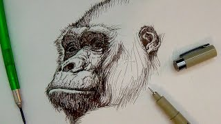 320x180 Drawing Amp Illustration How To Draw A Real Monkey Music Jinni