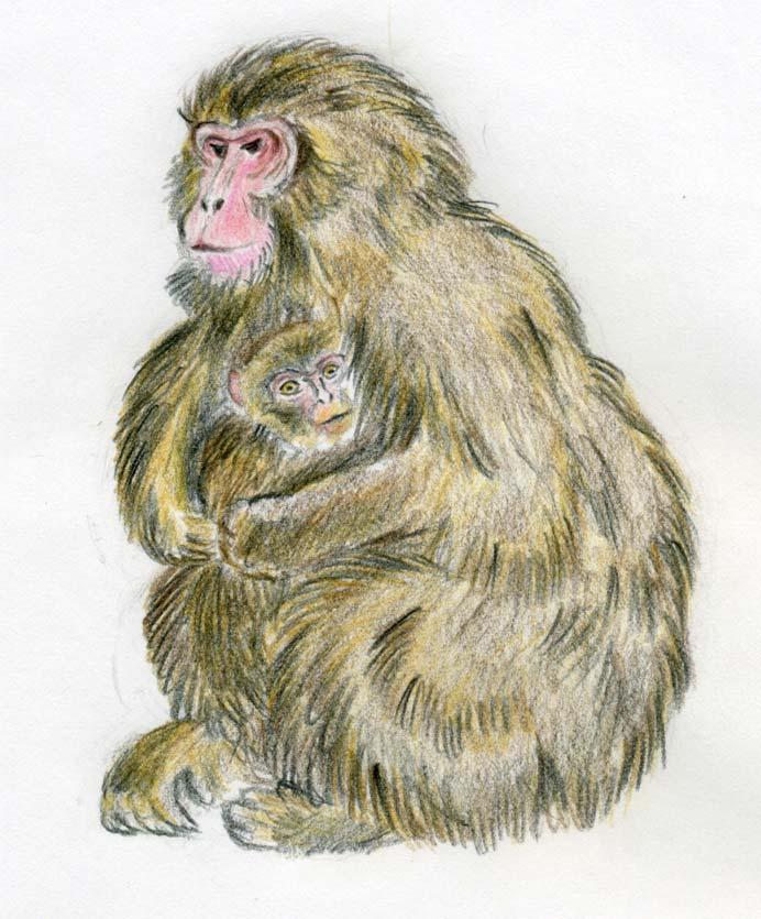 692x835 How To Draw A Monkey