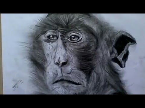 480x360 How To Draw Photo Realistic Monkey (Speed Drawing) Byrtist