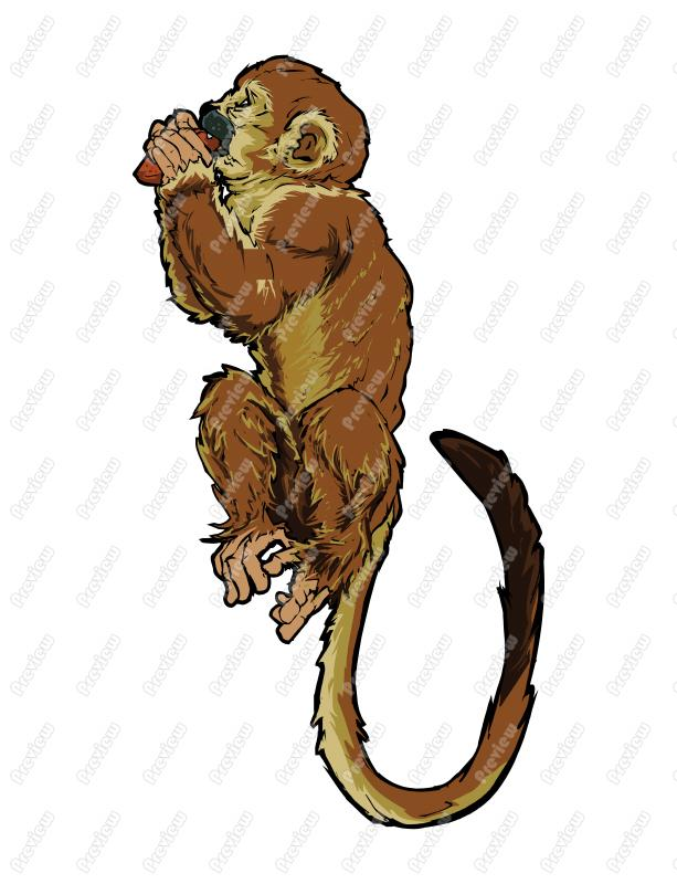 613x800 Squirrel Monkey Character Clip Art