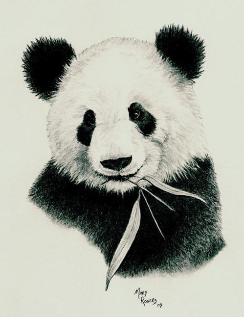 499x646 Panda Art Print By Mary Rogers Panda, Mary And Printing